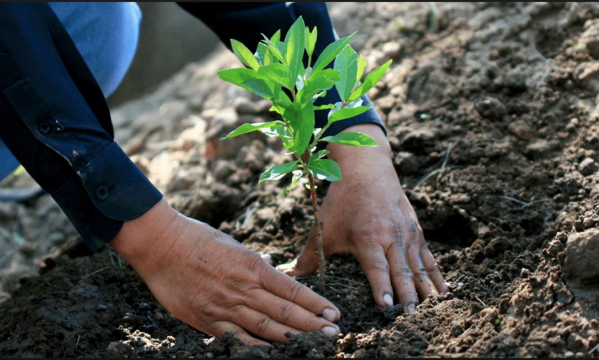 características de la reforestacion
