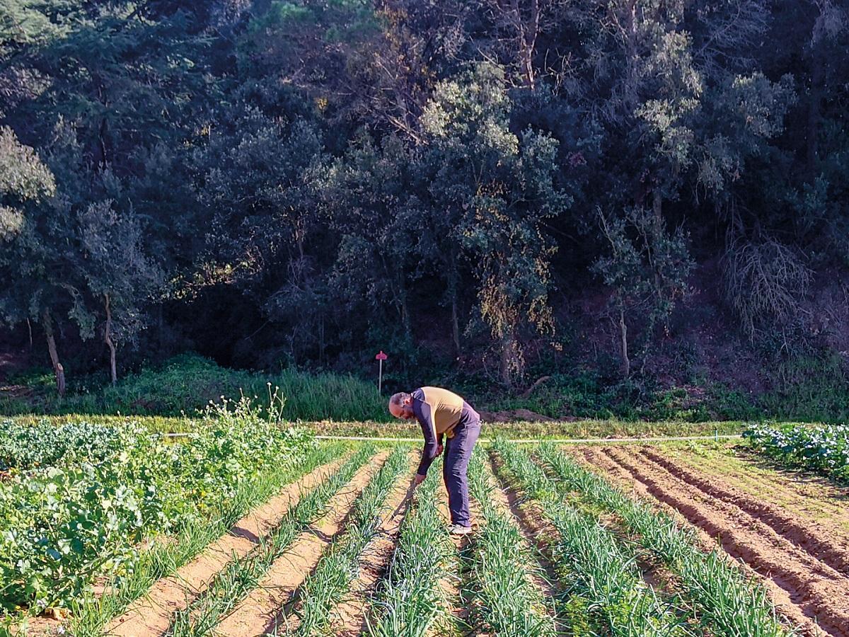 caracteristicas de la agricultura biodinamica