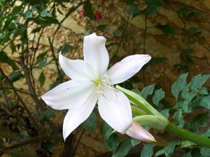 Las flores tienen perianto normalmente