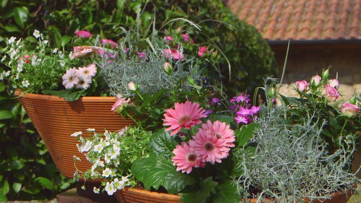 flores del rosal mini