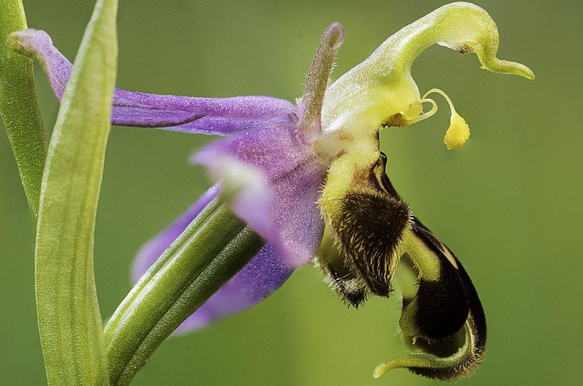 imagen ampliada de la flor de la orquidea