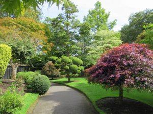 Hay muchas plantas que estarán bien en un jardín japonés