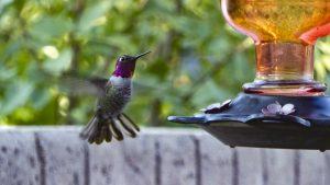 Atrae pájaros al jardín poniendo bebederos