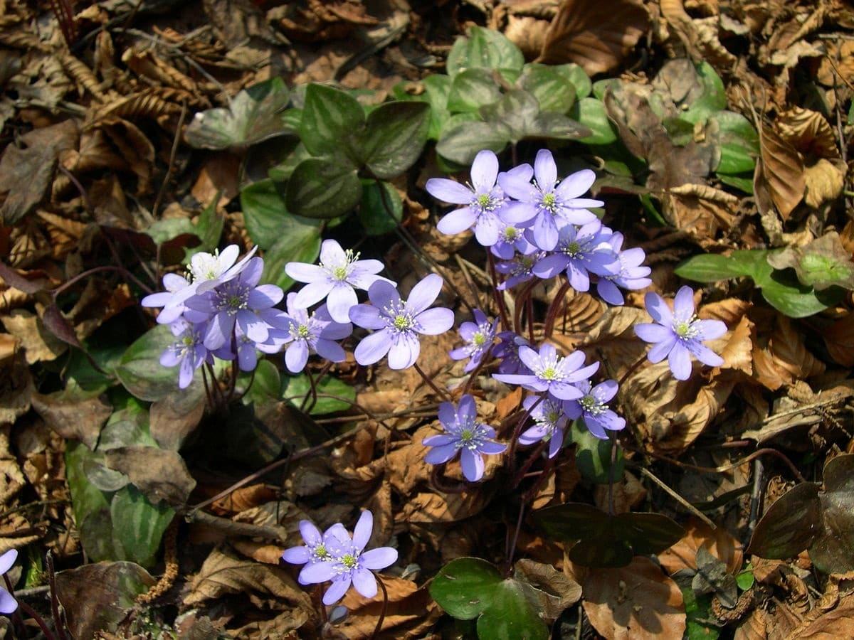 planta con flores de un color lila o morado