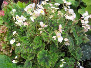 planta llena de pequenas flores rosas