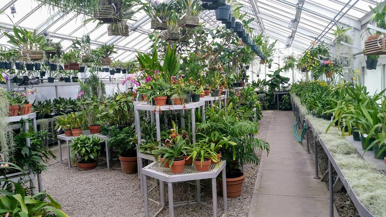 Hay muchas plantas difíciles en los viveros