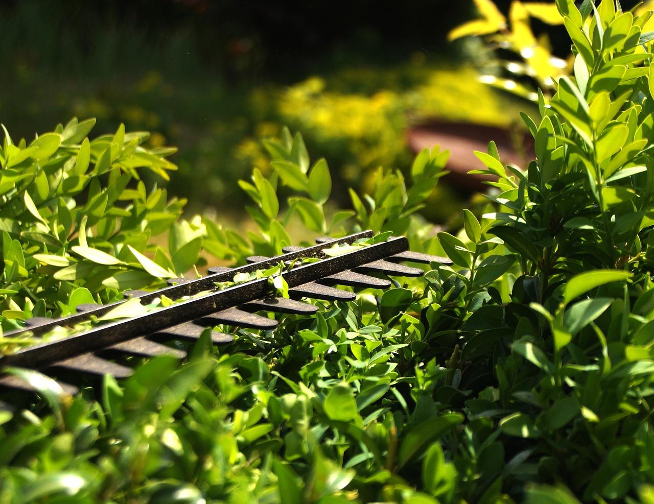 Utiliza un cortaseto para podar tus arbustos cómodamente