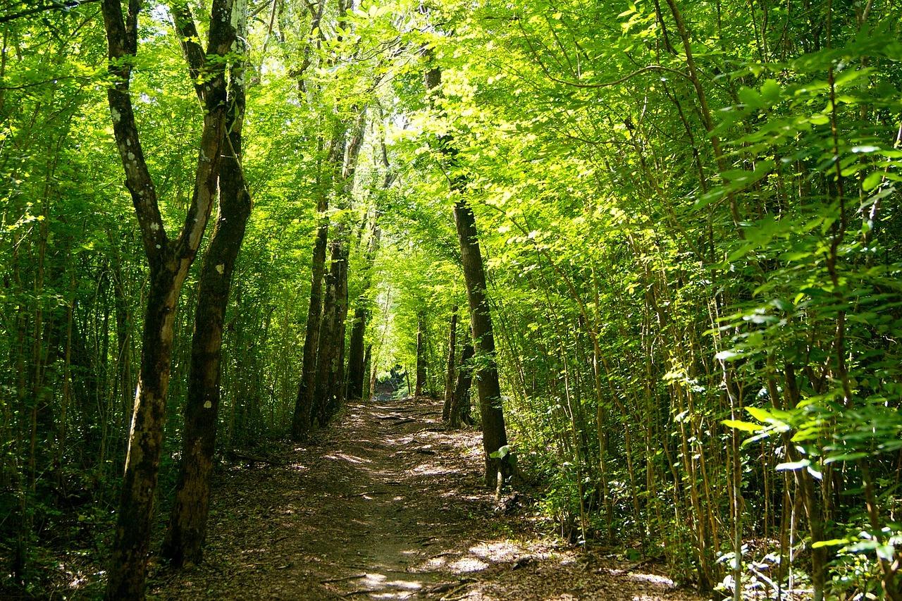 En el bosque hay muchas plantas endémicas