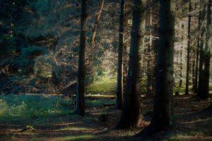 arboles del bosque templado