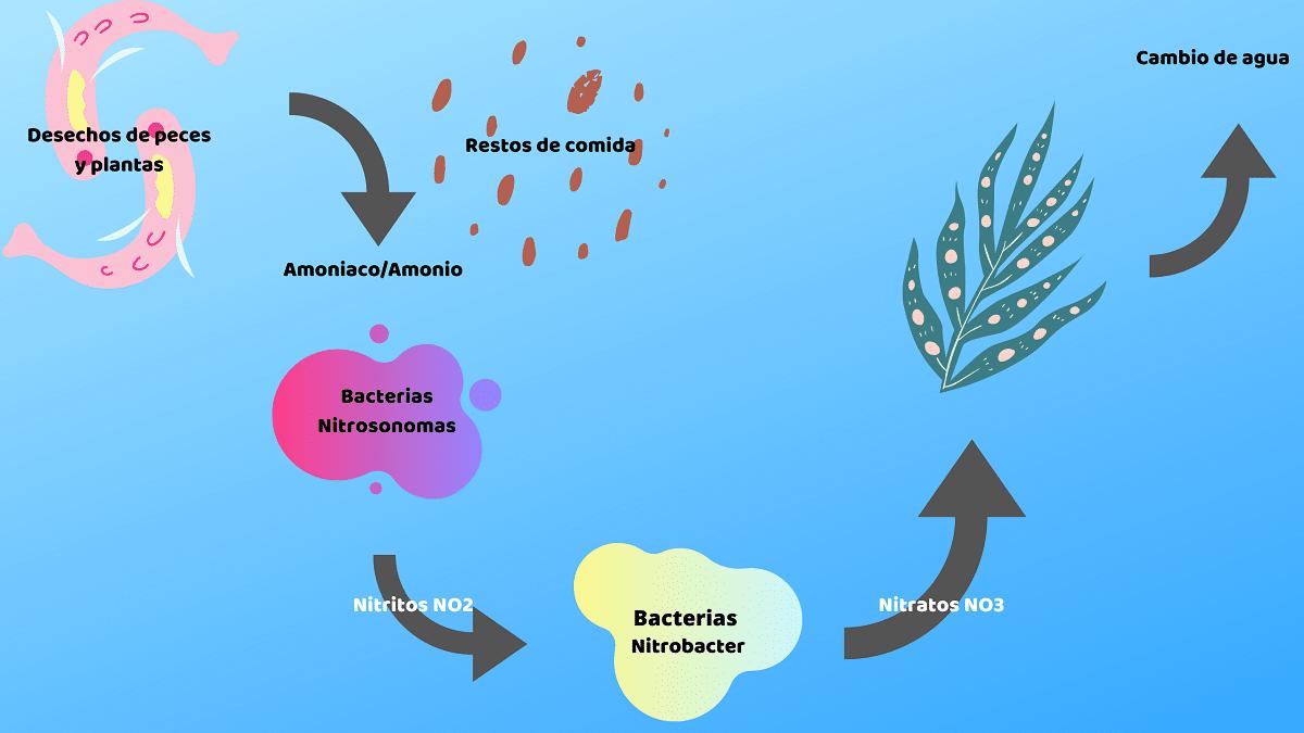 balance de nitrogeno