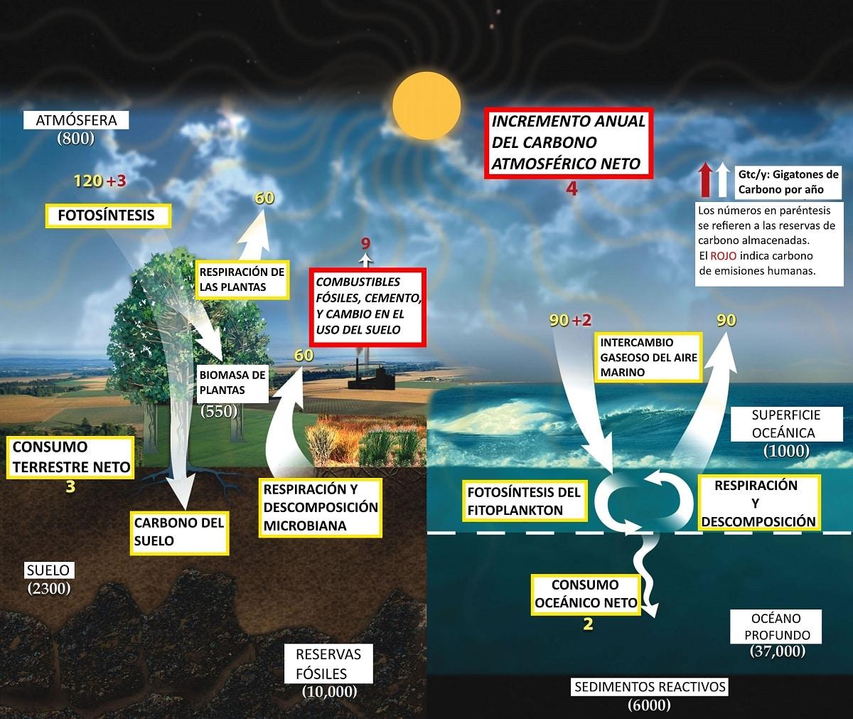 balance del ciclo del carbono