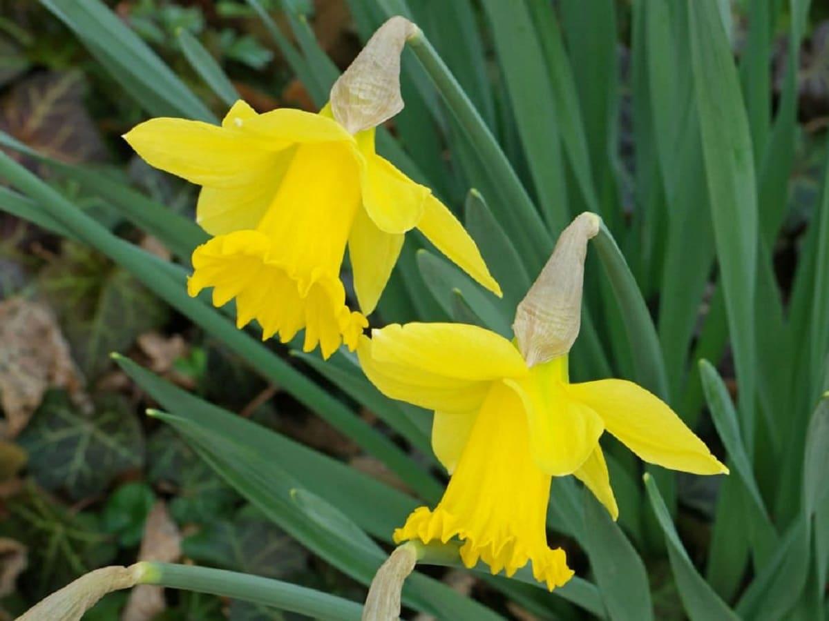 belleza de flor amarilla