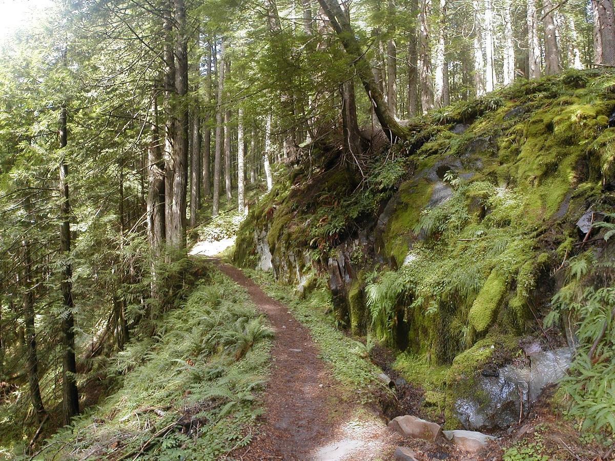 bosque templado humedo