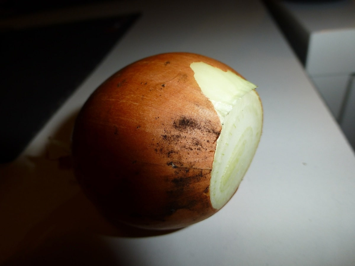 cebolla con moho negro