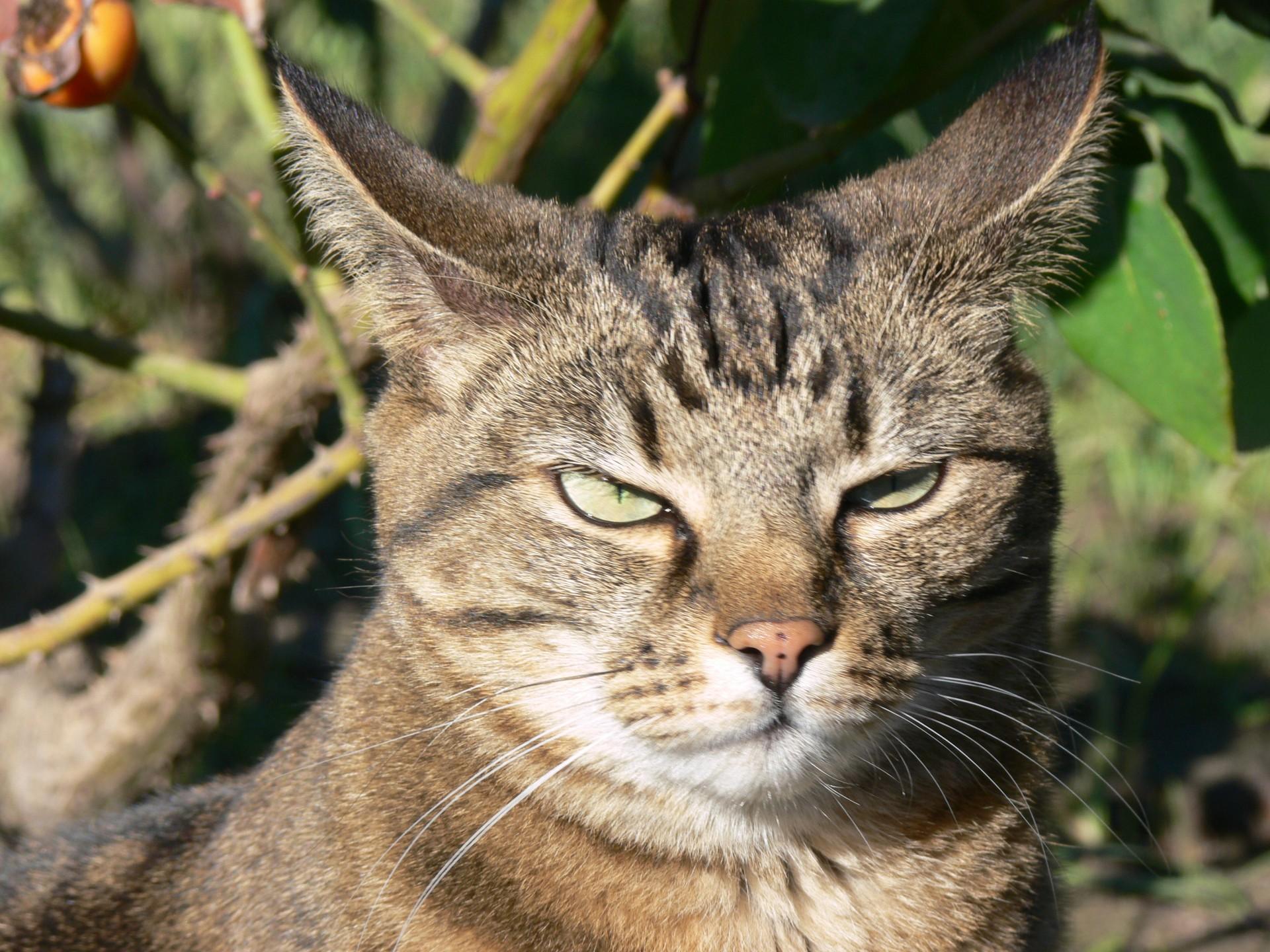 Los gatos que van al jardín tienen que estar identificados