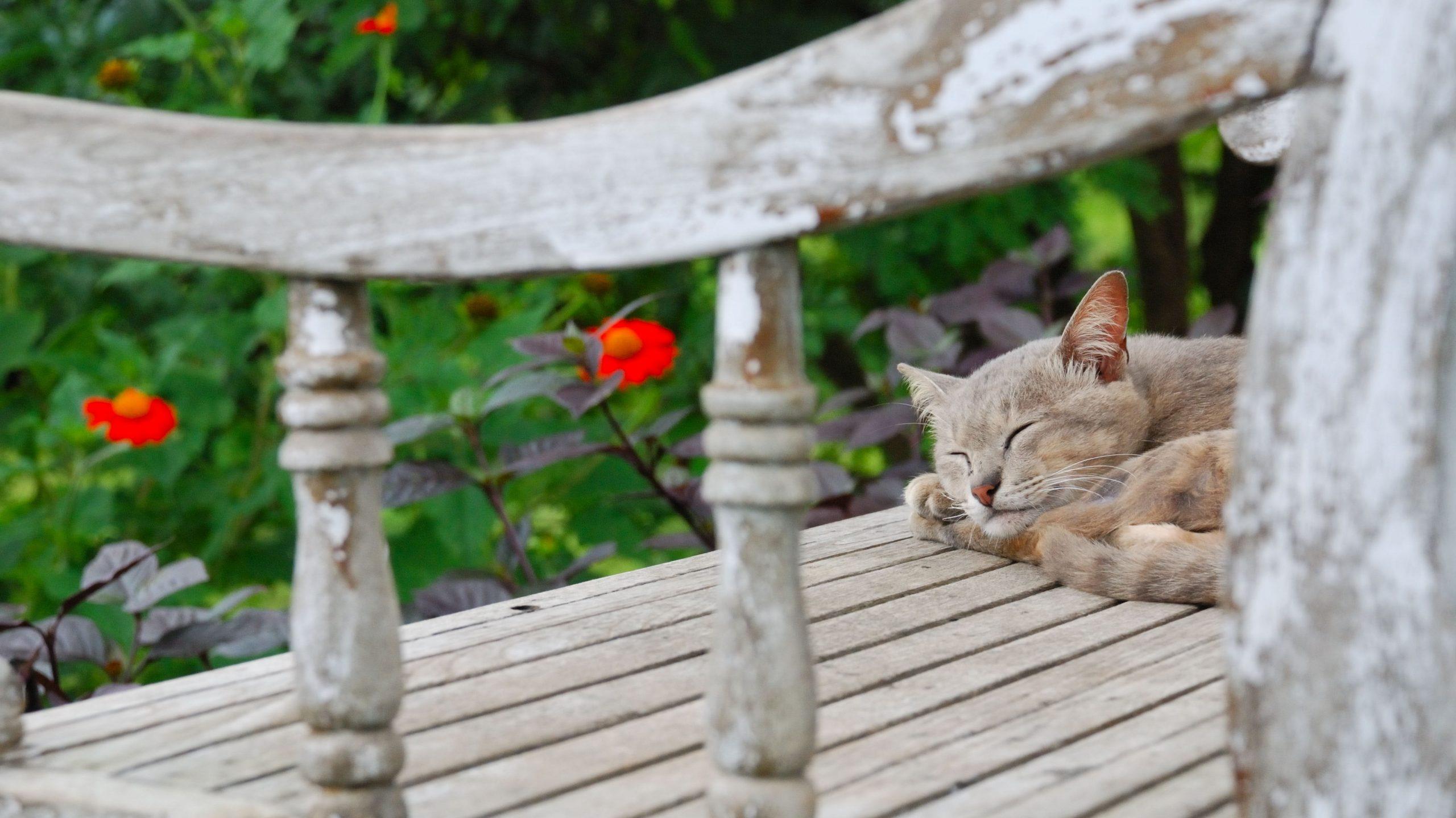 Es posible tener gatos en el jardín y no tener problemas