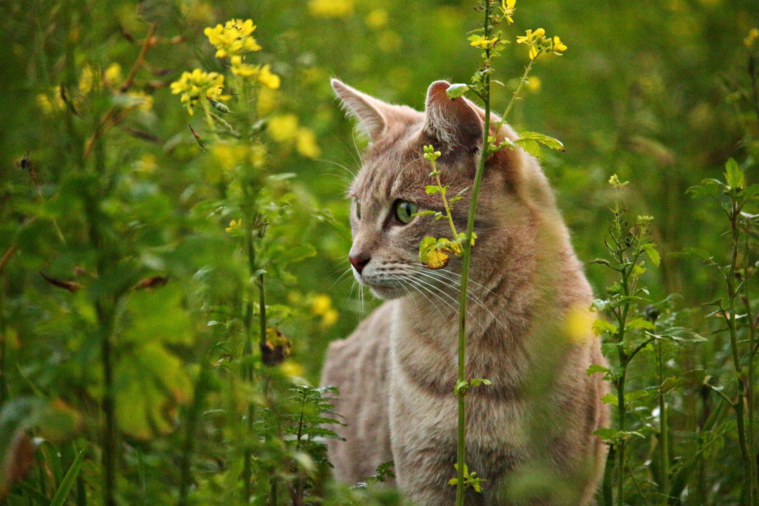Los gatos tienden a hacer sus necesidades en el jardín
