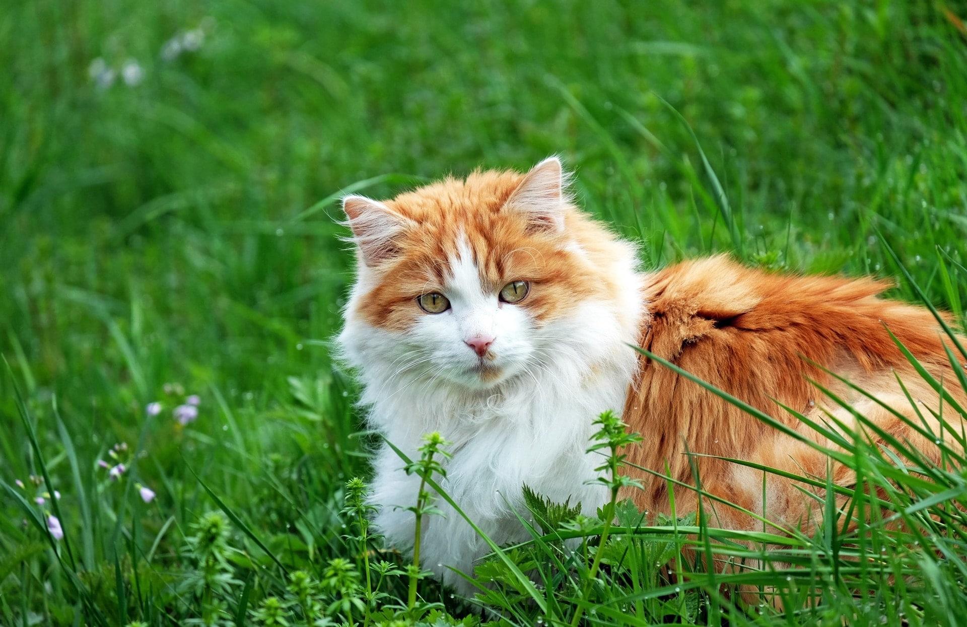 Los gatos pueden ir mucho al jardín