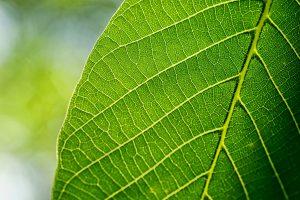 El xilema y el floema son partes de las plantas