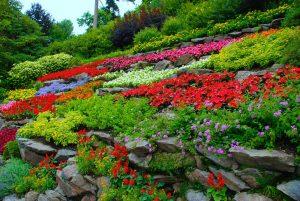 Un jardín con flores es un jardín lleno de vida