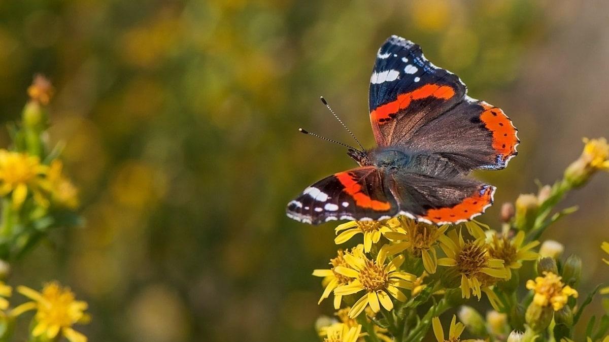 mariposa posada encima de unas flores amarillas