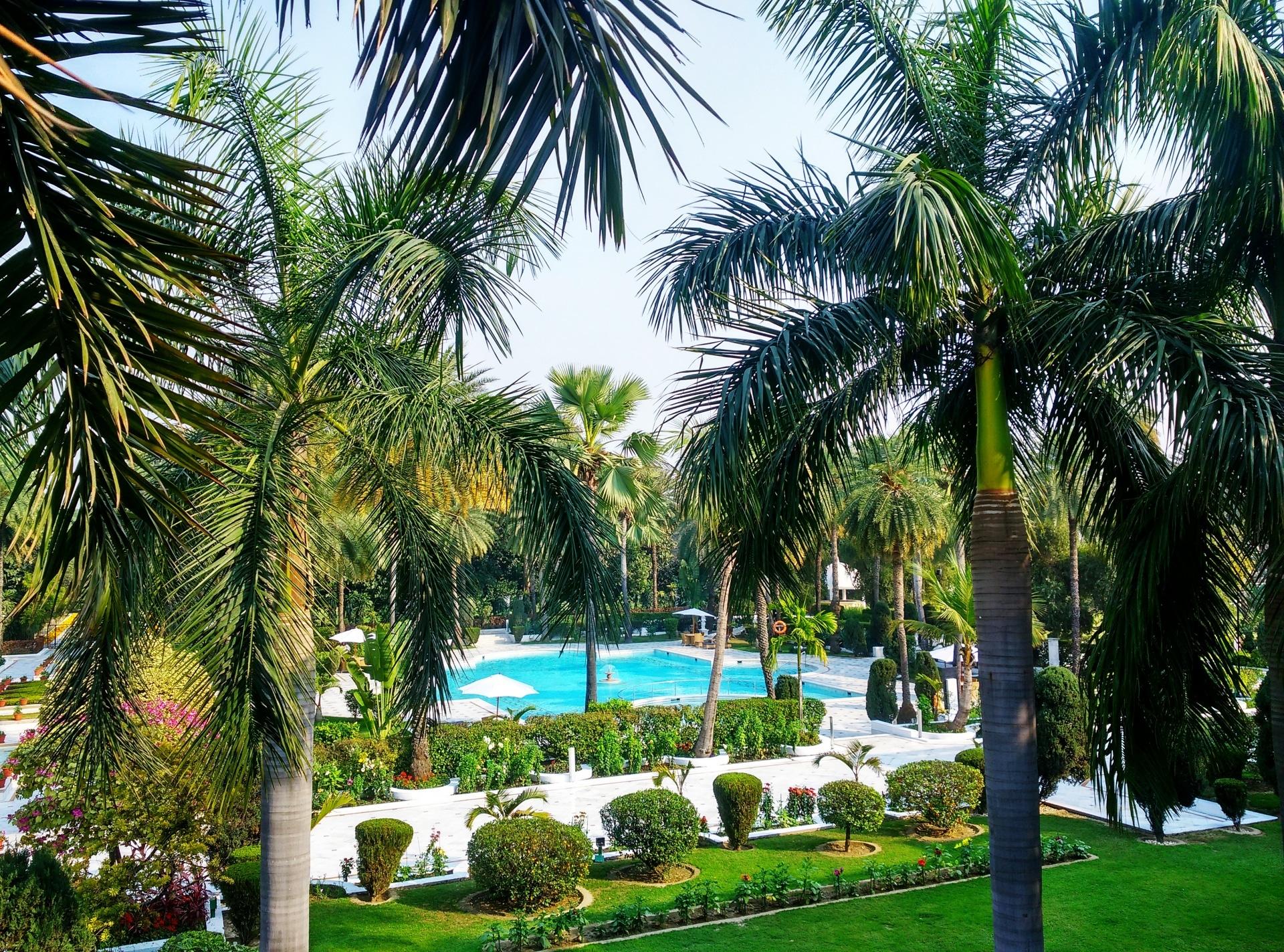 Hay muchas palmeras que resisten el sol