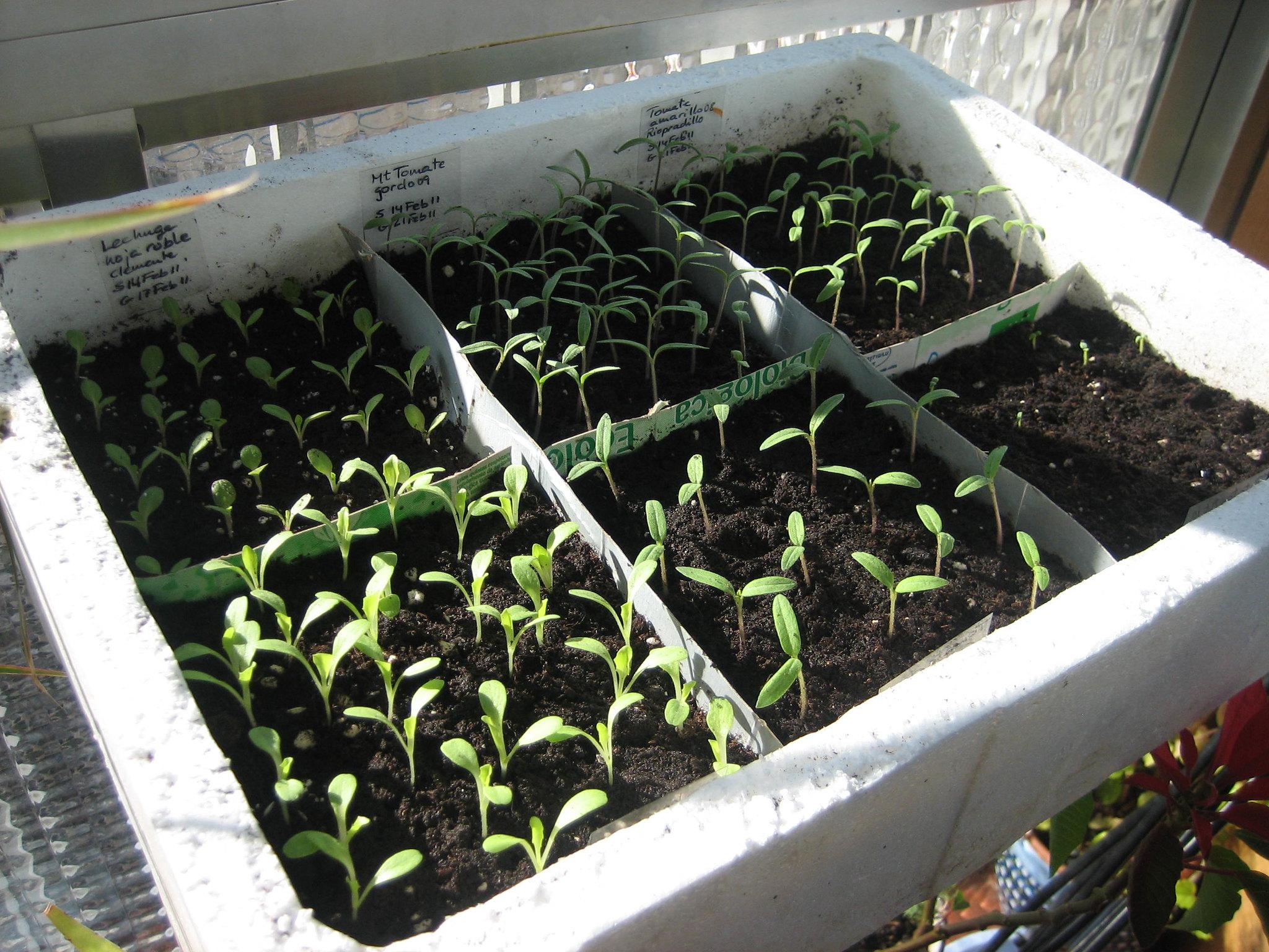Los semilleros pueden ser caseros