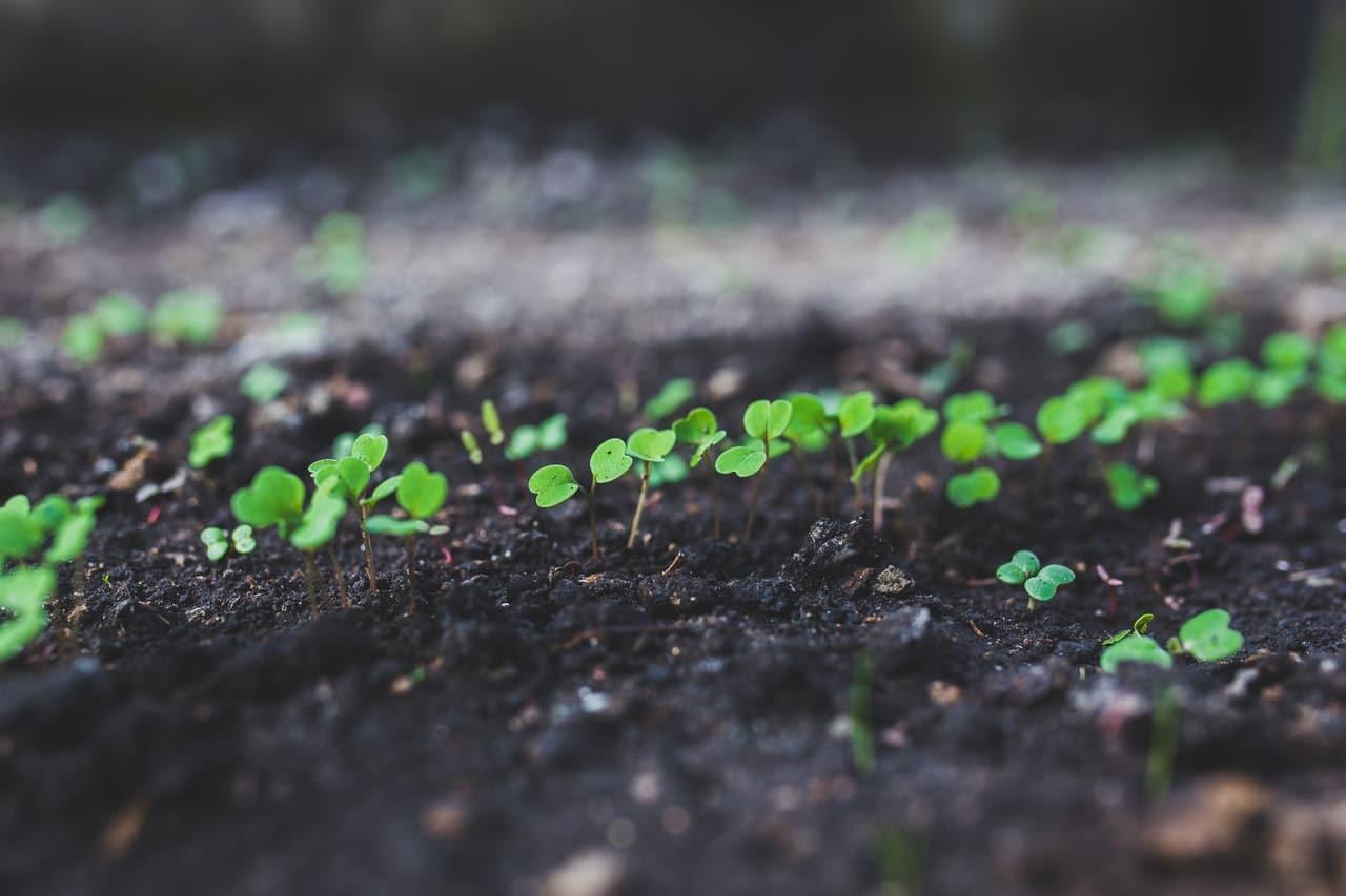 Los semilleros son útiles para sembrar