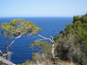 En la Sierra de Tramuntana de Mallorca hay varios endemismos