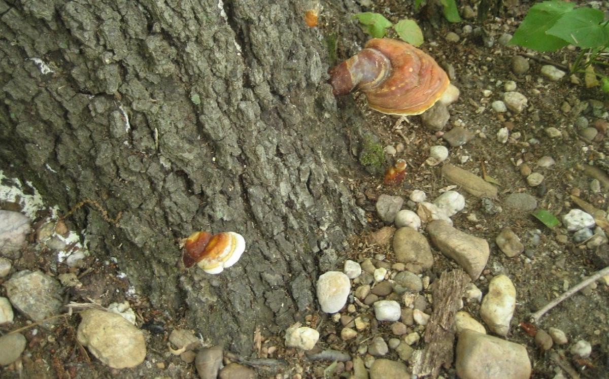 tronco de arbol donde aparecen hongos