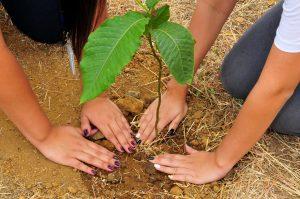 La reforestación es un sistema útil para que haya más vida