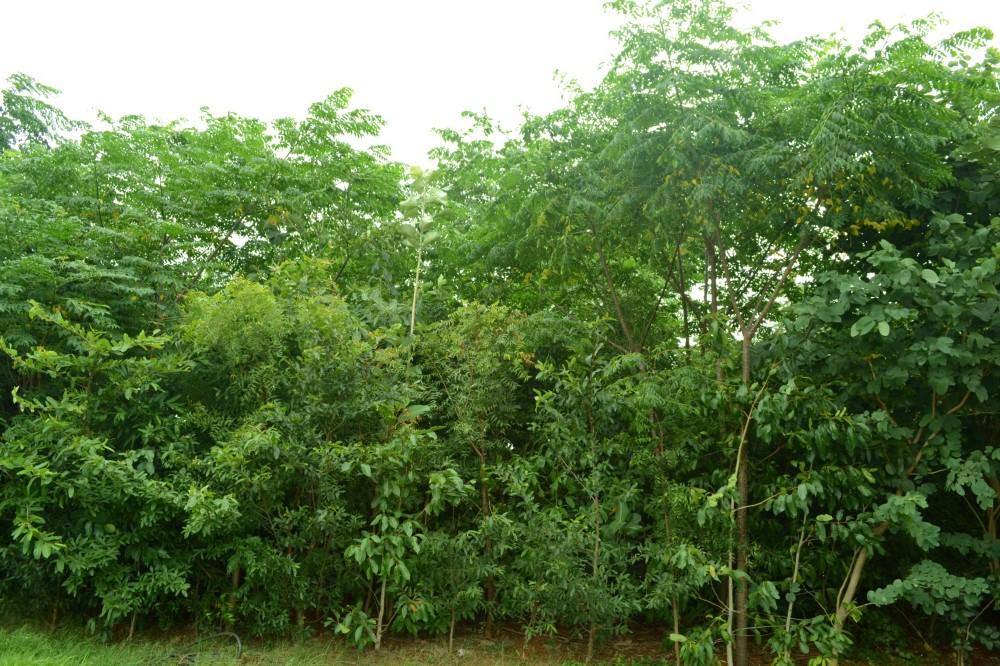 Un bosque joven tiene plantas en pleno crecimiento