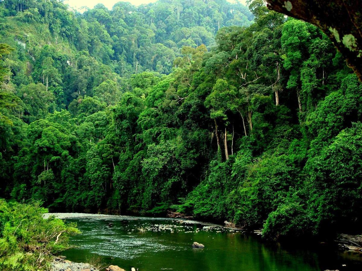 bosques humedos