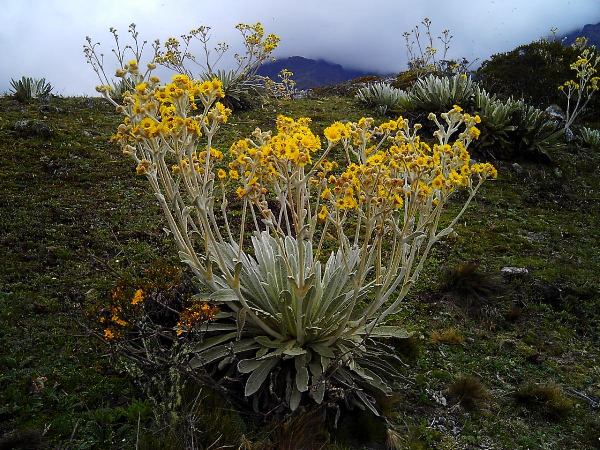 Hay plantas herbáceas marcescentes