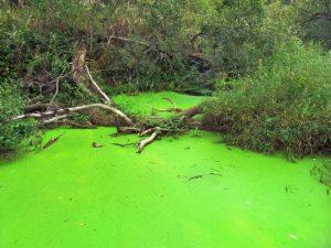 La eutrofización es un proceso no contaminante totalmente