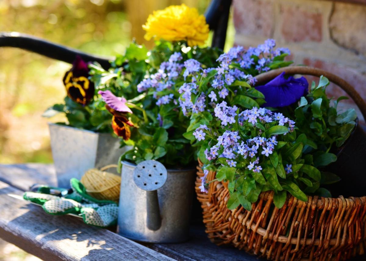 Es necesario tener algunas nociones de jardinería para cuidar plantas