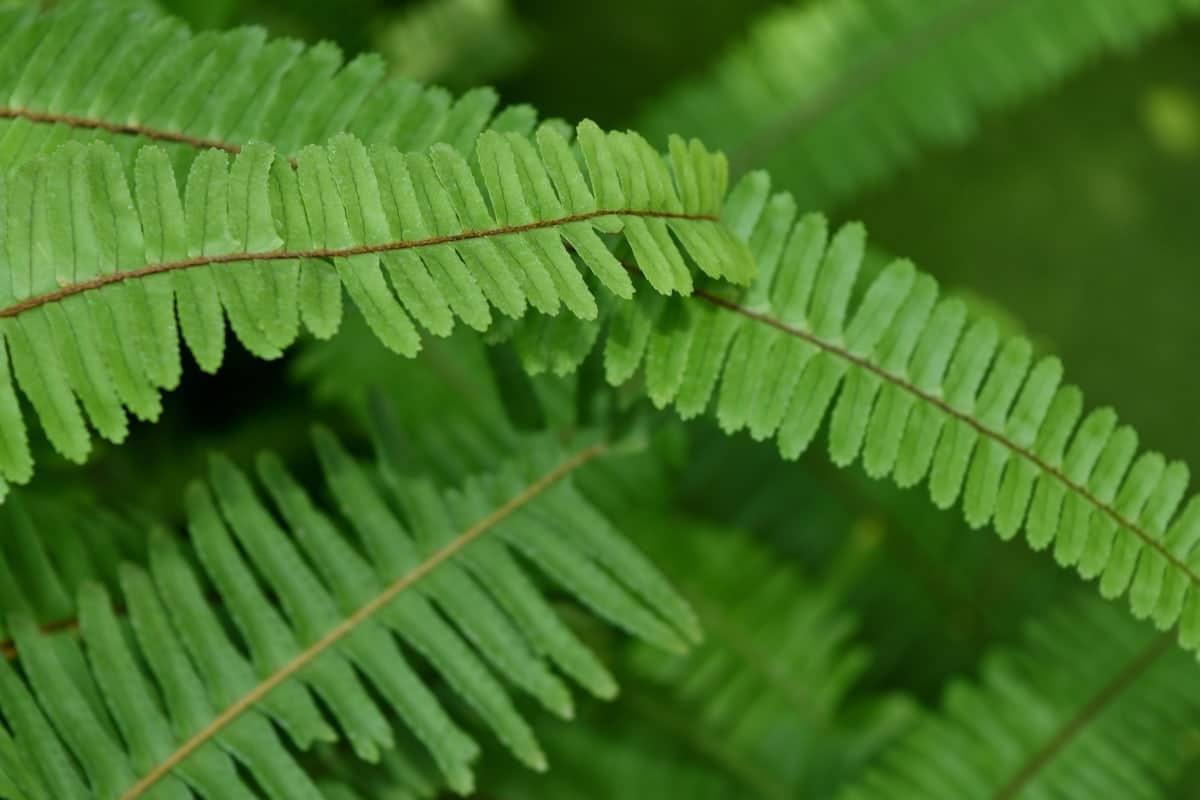 El fotoperíodo es un conjunto de procesos que regulan las funciones de las plantas