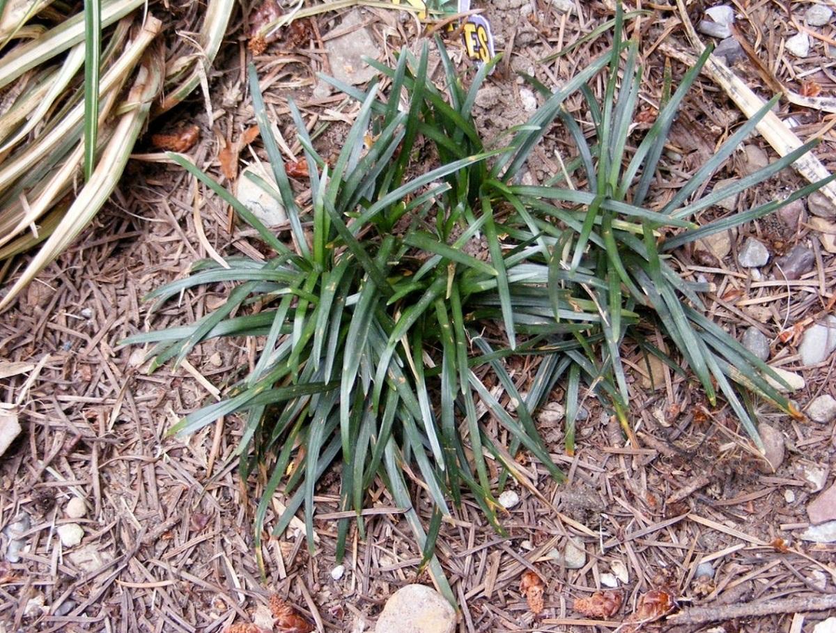 planta que puede crecer en zonas secas y sin mucha agua