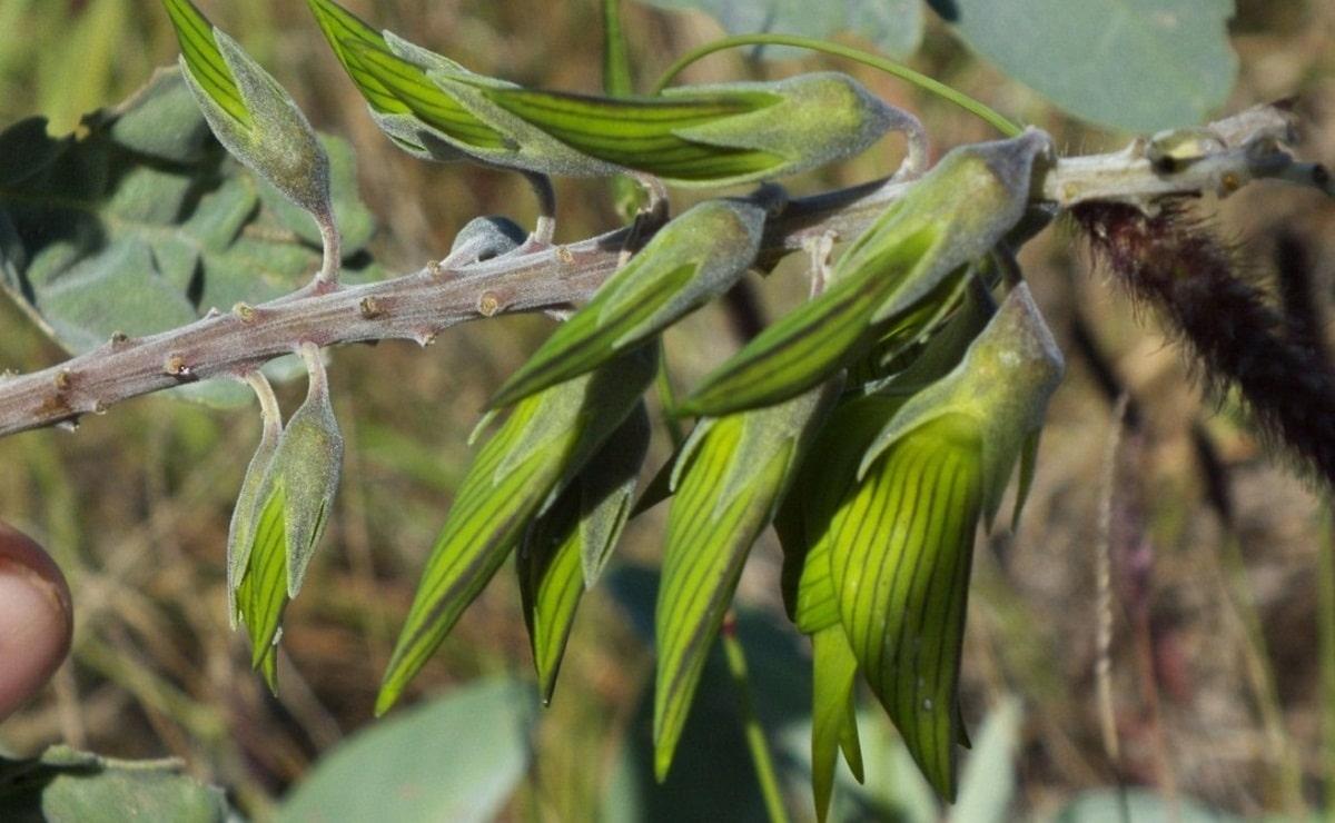 rama con flores que tienen la apariencia de ser unos colibris