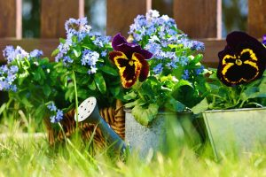 El riego de las plantas de exterior es diferente al de las de interior