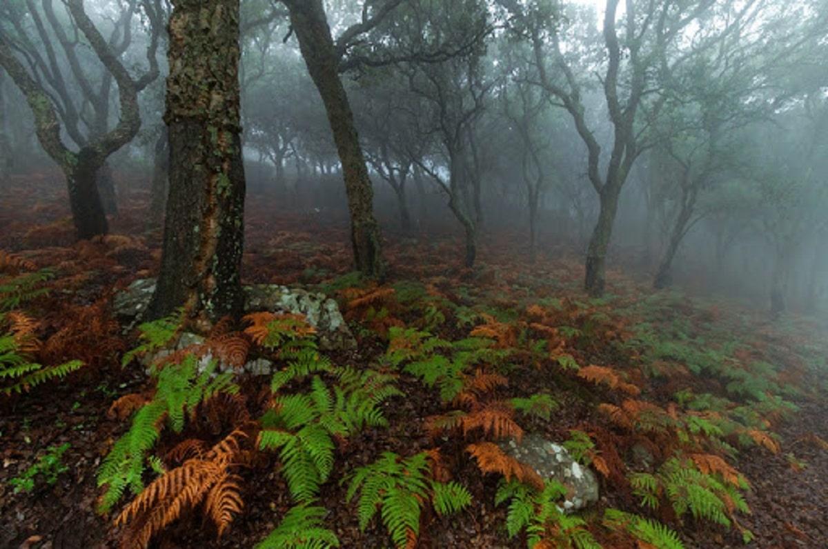 vegetacion del bosque de niebla
