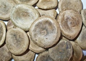 La nux vomica tiene semillas ovales