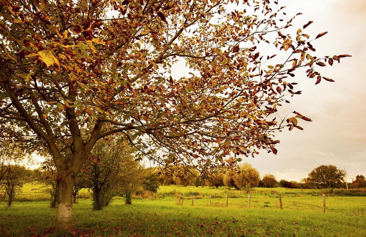 Los árboles pueden secarse rápido