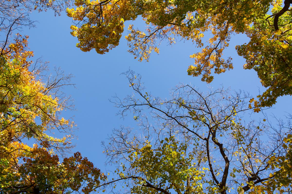 Un árbol que pierde sus hojas no tiene por qué estar muerto necesariamente