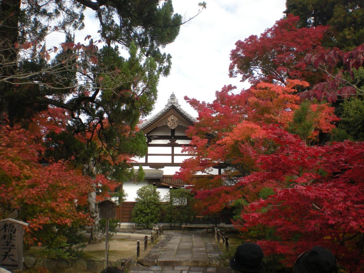 Los arces japoneses son árboles de montaña