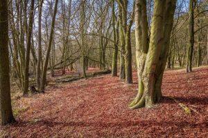 Un bosque caducifolio está compuesto por plantas que pierden las hojas