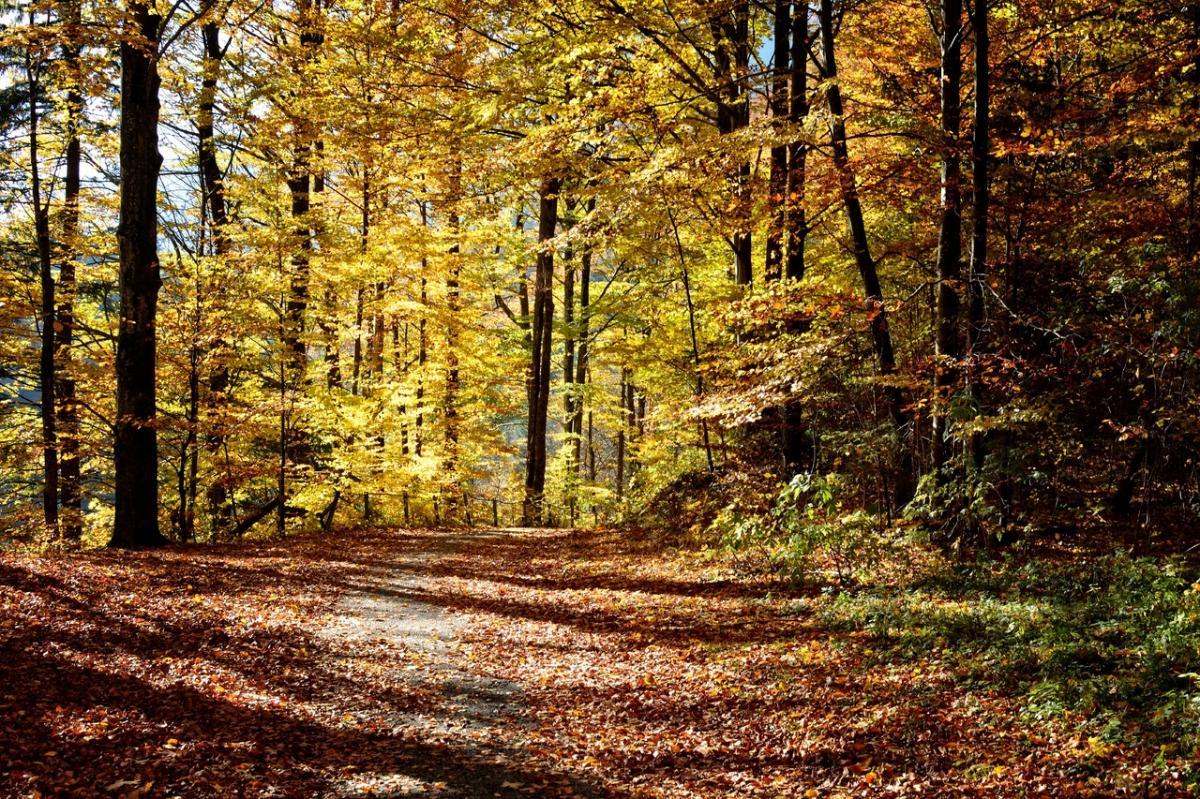 Los bosques templados se quedan sin hojas en invierno