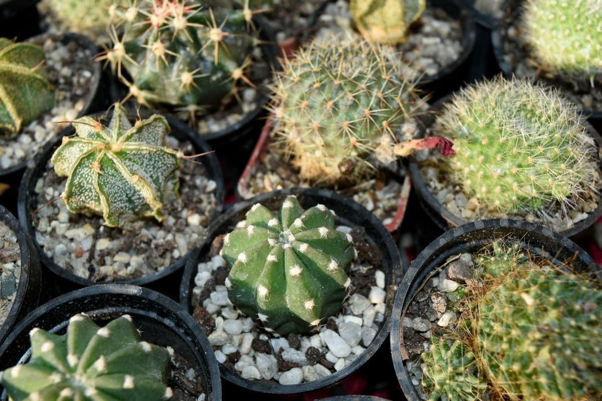 Los cactus se han de aclimatar al sol