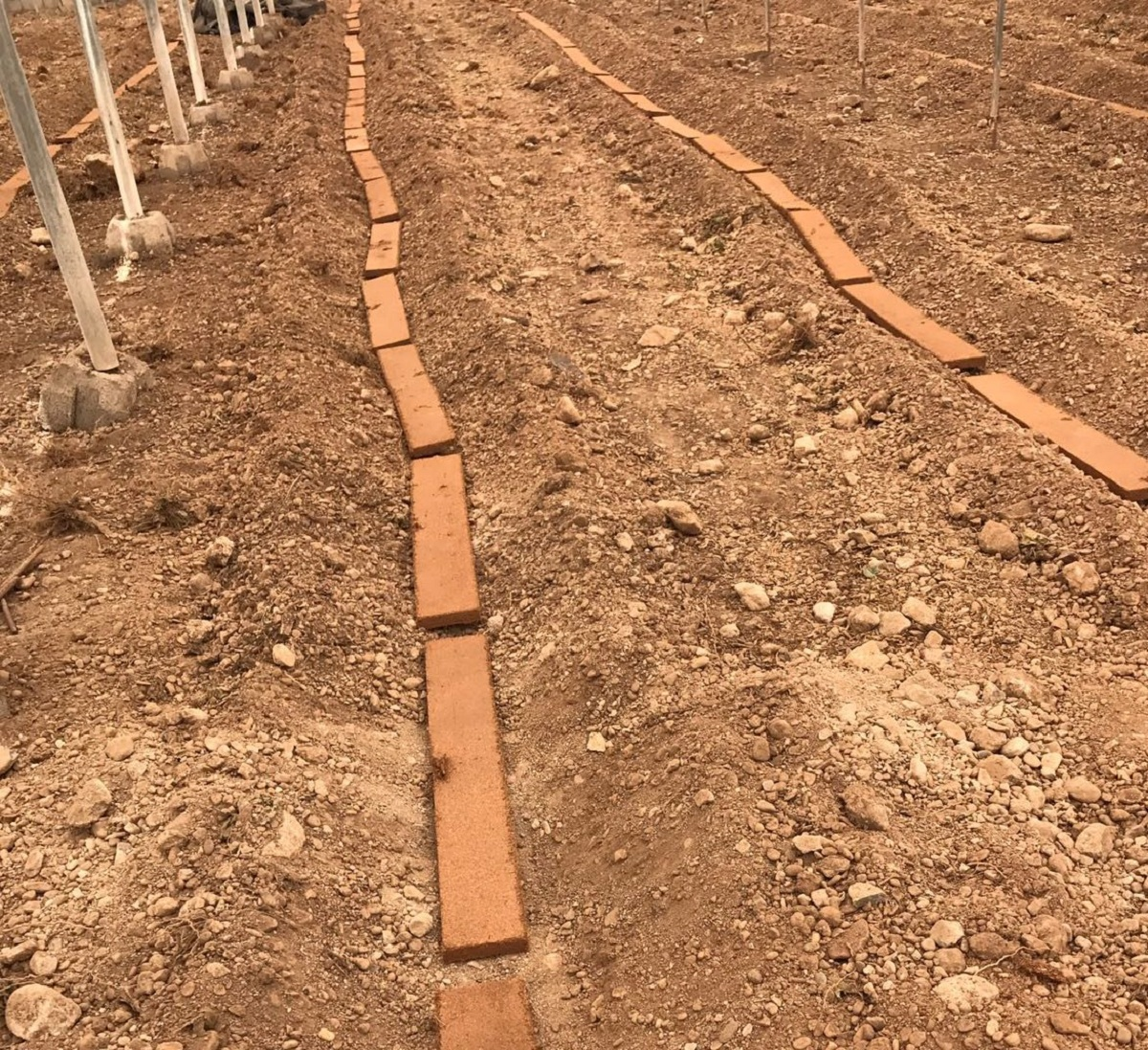 cultivos con fibra de coco