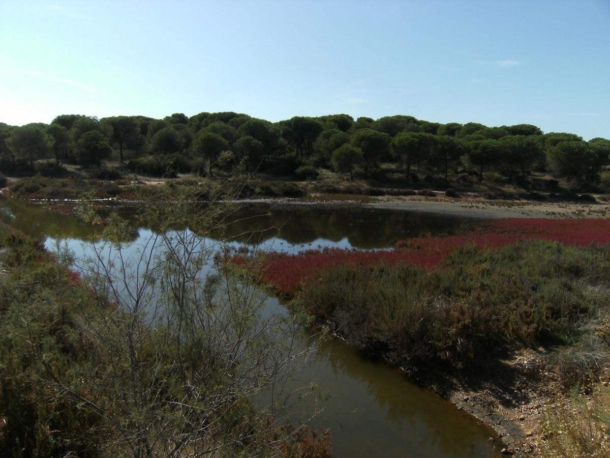 ecosistema marismas